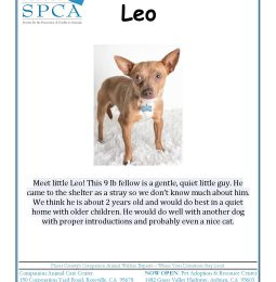 Meet Leo – The KAHI/SPCA Pet of The Week
