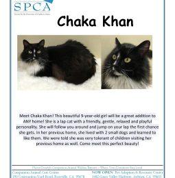Chaka Khan, This Week's Pet of The Week