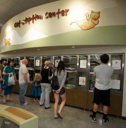 New SPCA Center in Roseville Sheltering CARR Fire Dogs!