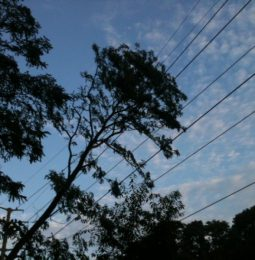 High Wind Forecast May Bring PG&E Outages!