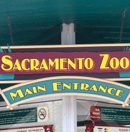 Sac Zoo Looking At Sleep-Train Arena As New Home!