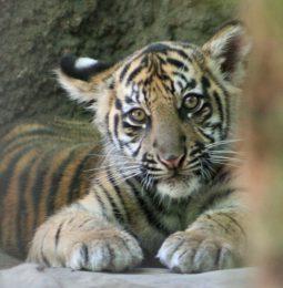 Sac Zoo Wants To Move, Natomas Wants It!