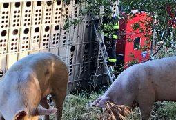 Trailer On Fire Full Of Pigs on I-80!