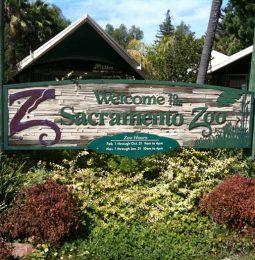 Sac Zoo Looking To Move!