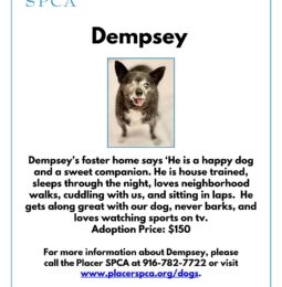 Pet of The Week – Dempsey