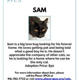 Sam – Pet of The Week