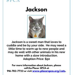 New Pet Of The Week – Jackson