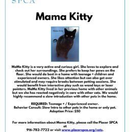 New Pet Of The Week – Mama Kitty