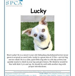Meet Lucky! KAHI's Placer SPCA Pet of The Week
