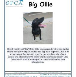 Meet Big Ollie