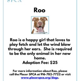 New Pet Of The Week – Roo