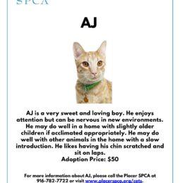 """Pet Of The Week – """"AJ"""""""